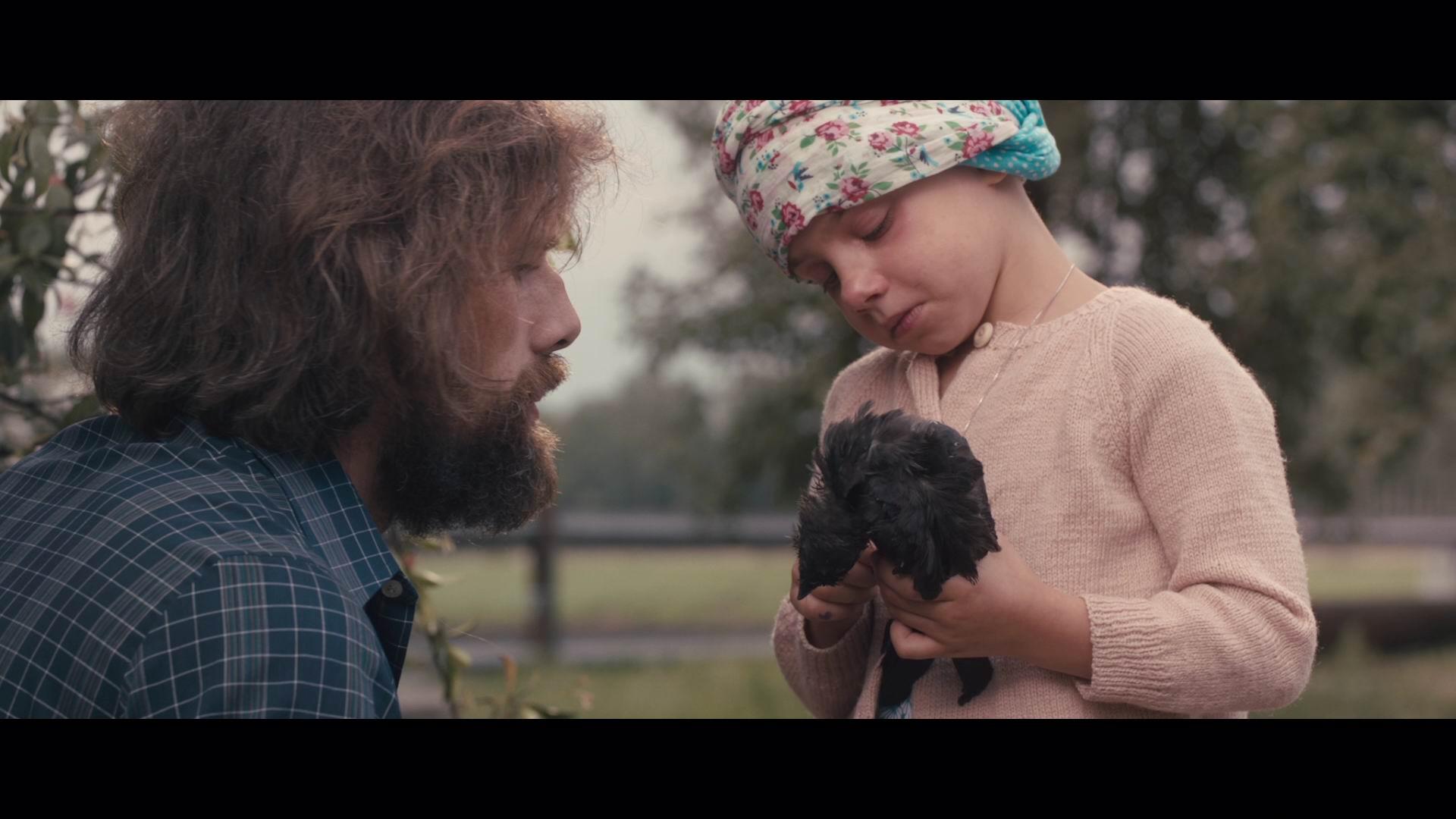 Broken Circle Breakdown, The (Blu-ray) - Allesoverfilm.nl ...